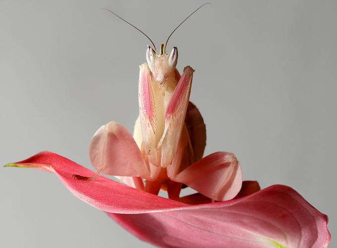 orchidee etrange
