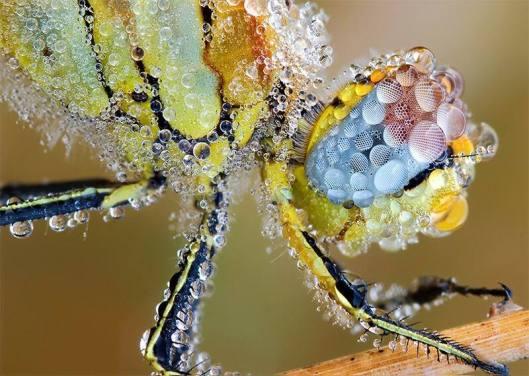 WetDragonfly