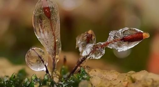 micro_winter_01-507x277