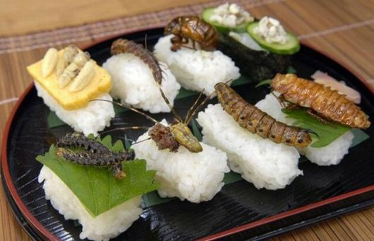 insect_sushi_04