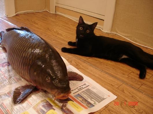 imagescat-fish