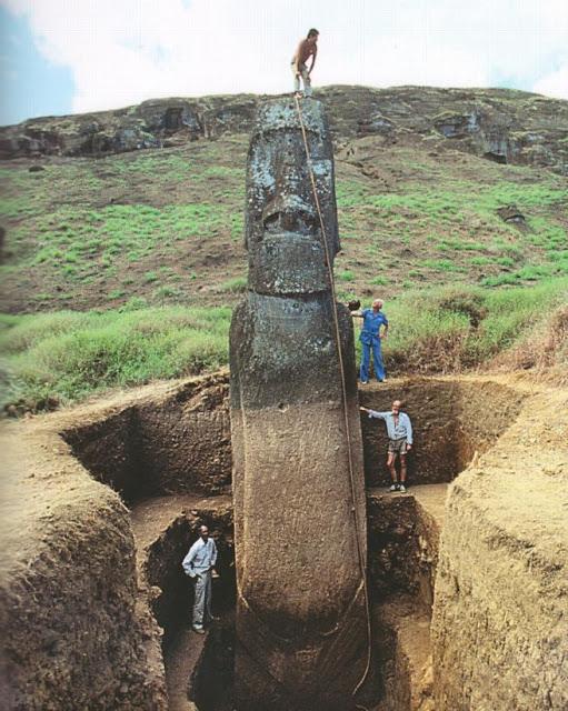moa excavated