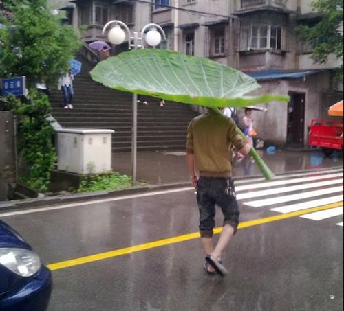 huge-leaf-as-umbrella