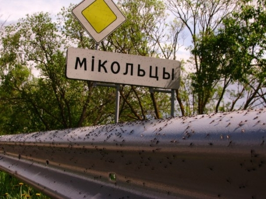 mosquitoattack001-34