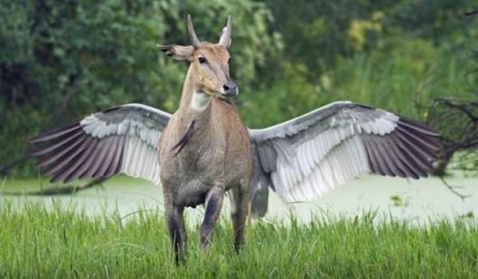 Winged-Antelope-634x371