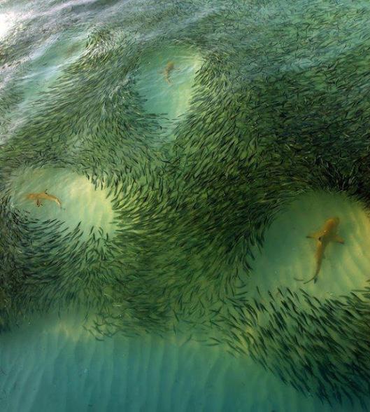sharks and baitfish