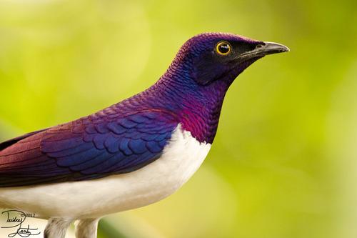 Oiseau4