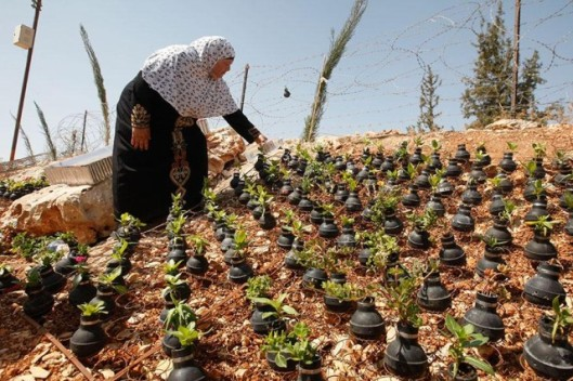tear-gas-flower-pots-palestine-1-640x426