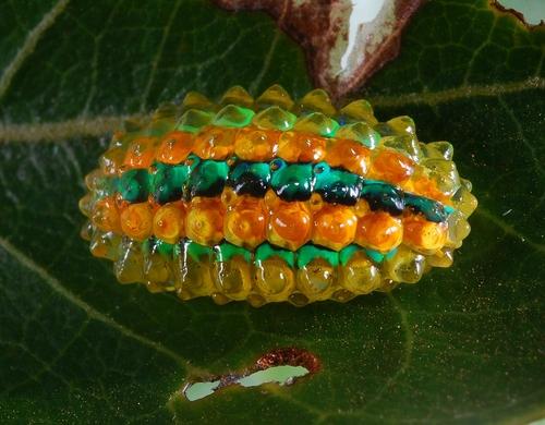 caterpillar4