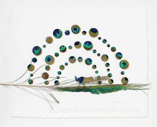 chris-maynard-feather-art-3