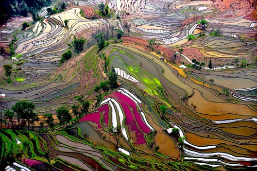 terraced-rice-fields-2__880