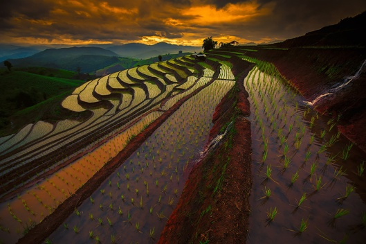 terraced-rice-fields-7__880