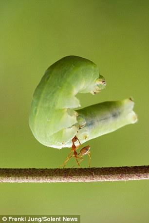 La force de la fourmi (1/6)