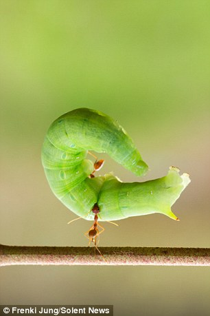 La force de la fourmi (3/6)