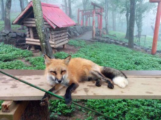 Fox-Sleeping