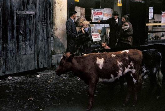 Ireland, 1954 (2)