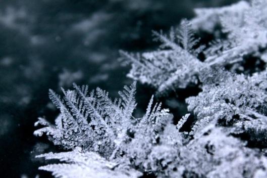 frost_flowers2012