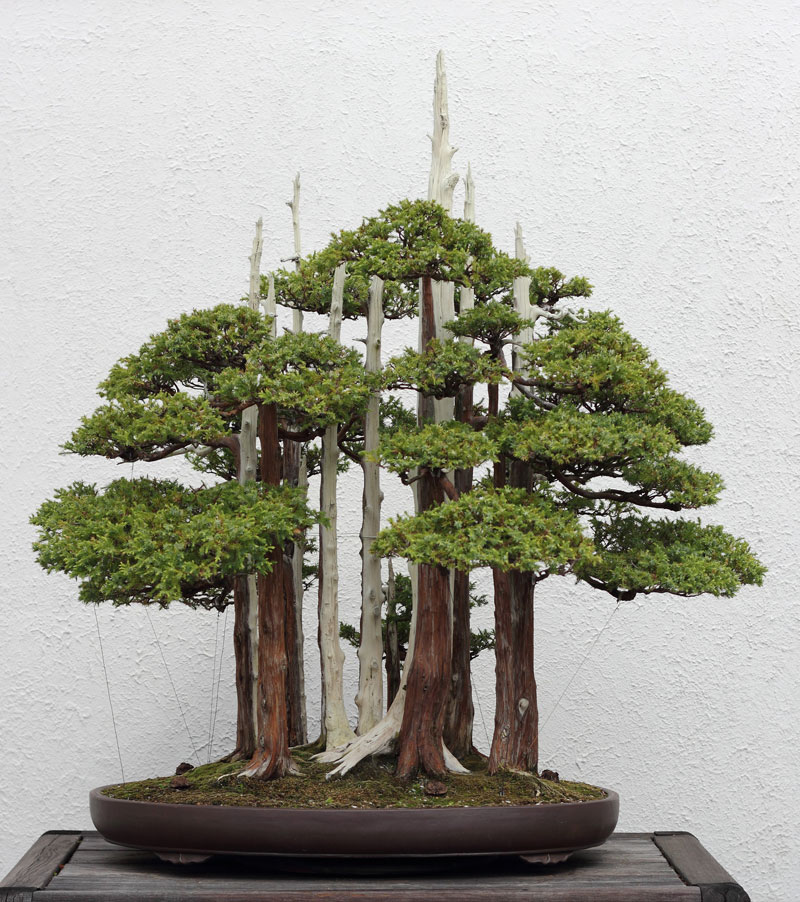 goshin-by-john-naka-bonsai-forest-for-grandchildren-3