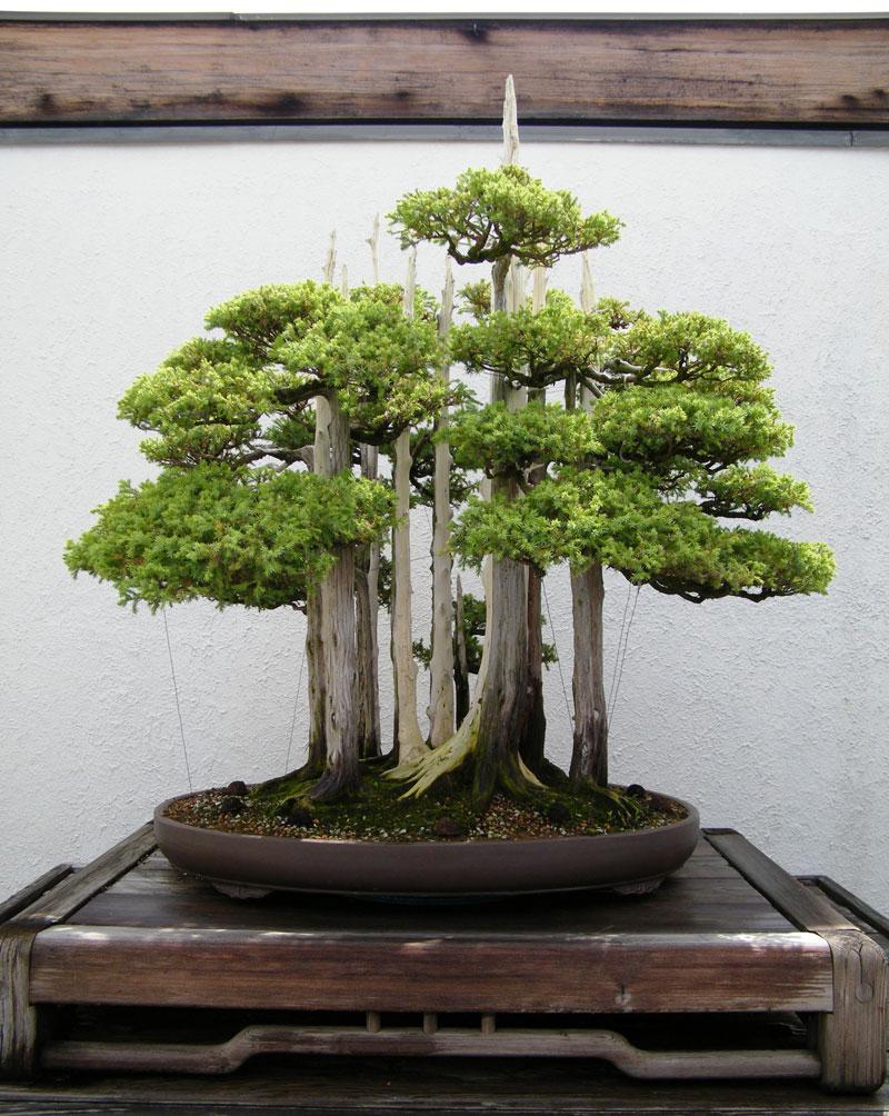 goshin-by-john-naka-bonsai-forest-for-grandchildren-4