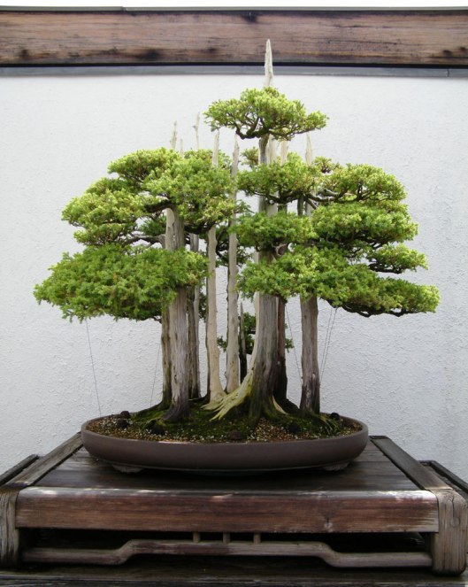 goshin-by-john-naka-bonsai-forest-for-grandchildren-4
