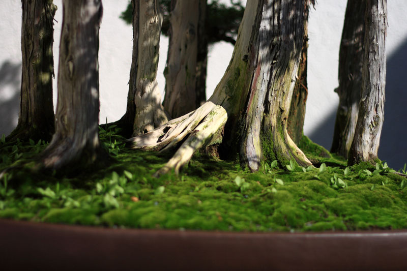 goshin-by-john-naka-bonsai-forest-for-grandchildren-6