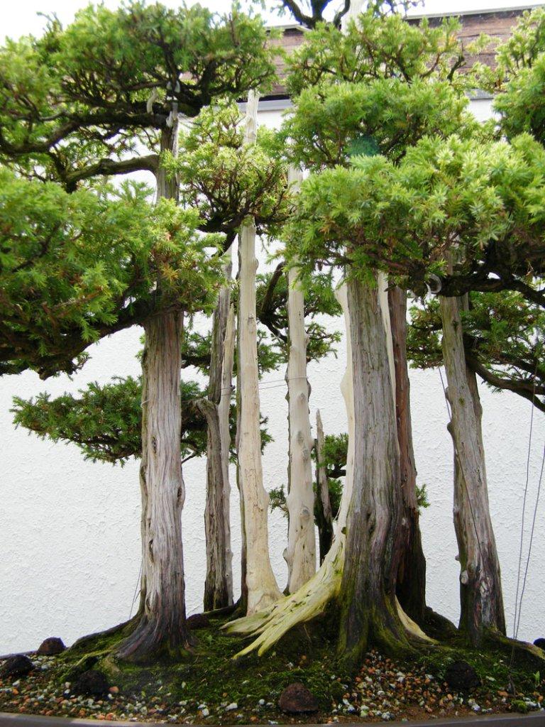 goshin-by-john-naka-bonsai-forest-for-grandchildren-7