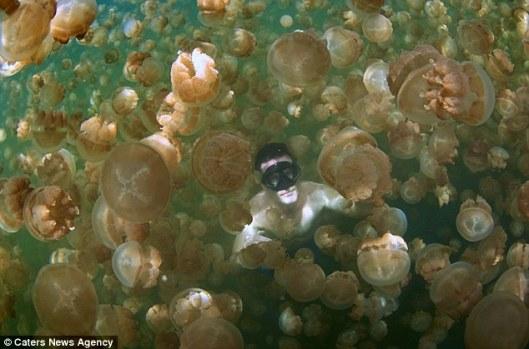 lac-meduses