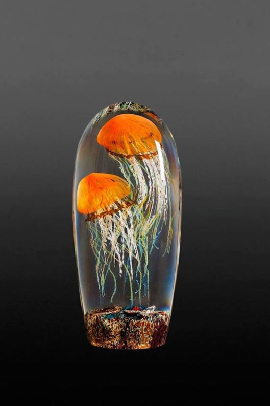 Pacific-Coast-Jellyfish1