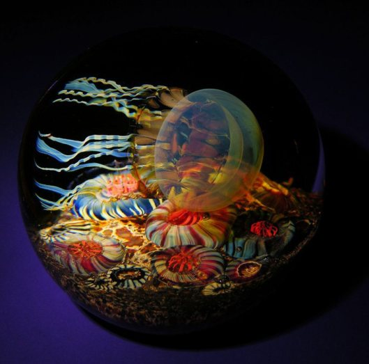 Side-Swimmer-Jellyfish