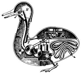 Schéma hypothétique de l'appareil digestif du canard.