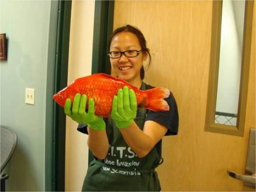 giant-goldfish-2