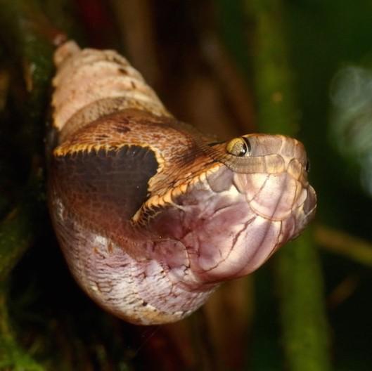 snake-not-1