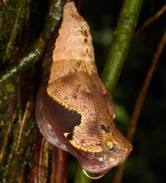 snake-not-4