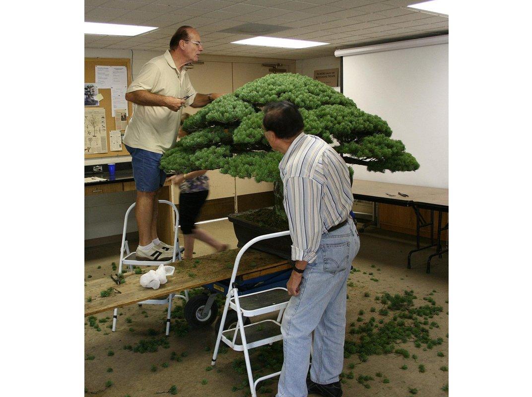 2009-tree-trim-web-resize.jpg__1072x0_q85_upscale