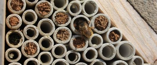 construire-hôtel-à-abeilles