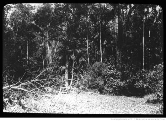 Colombie. 13, Une vue de la forêt de l'Ariguani, territoire chimila / [mission] J. de Brettes ; [photogr.] J. de Brettes? ; [photogr. reprod. par] Molténi [pour la conférence donnée par] Joseph de Brettes, 1895