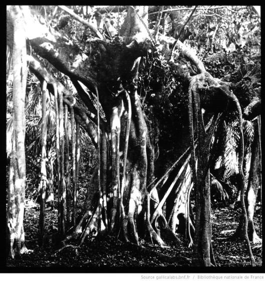 Haut Amazone. [...], Forêt versant oriental des Andes. Montana péruvienne / [mission] Monnier ; [photogr.] Monnier ; [photogr. reprod. par Molténi pour la conférence donnée par] Marcel Monnier, 1886. Source.