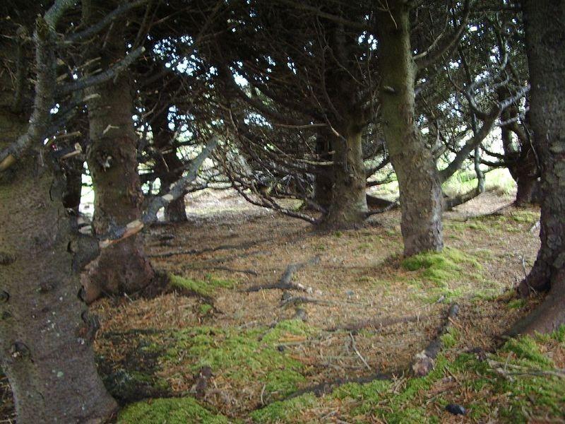 adak-national-forest-2[2]