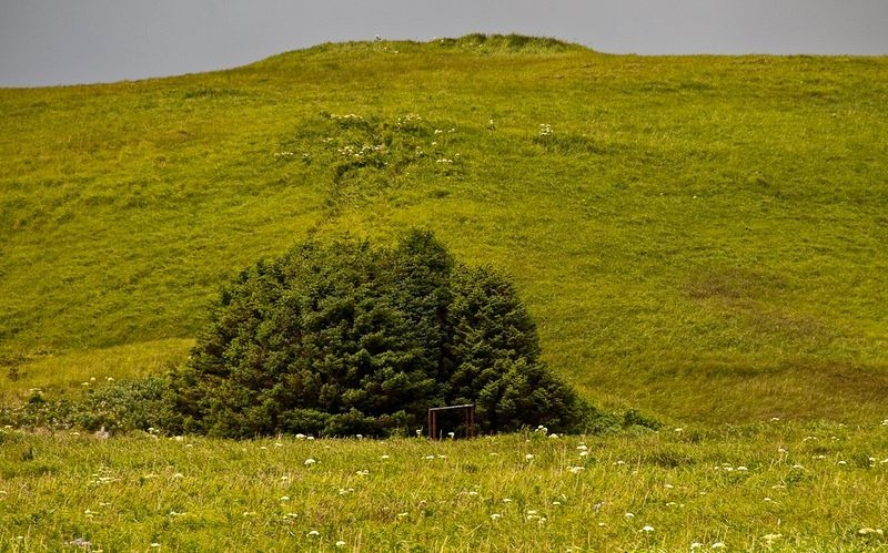 adak-national-forest-3[2]