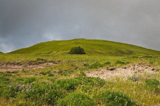 adak-national-forest-4[2]