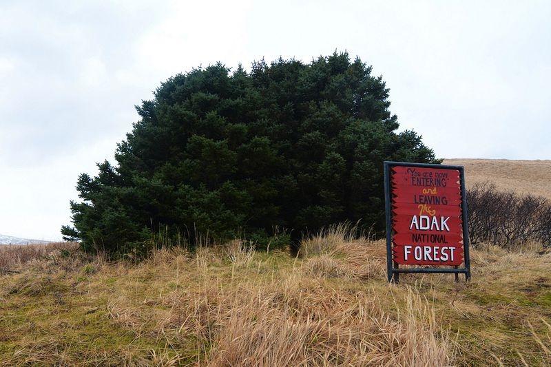 adak-national-forest-5[6]