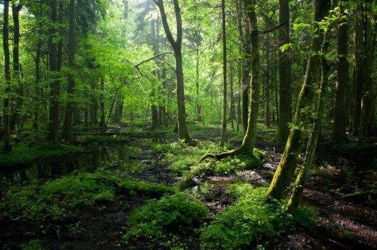 bialowiezaforest