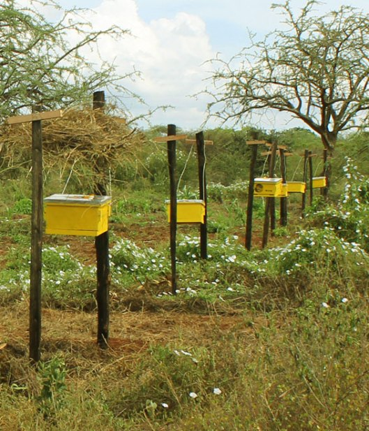 KING-Langstroth-beehive-fence-line-Tsavo1