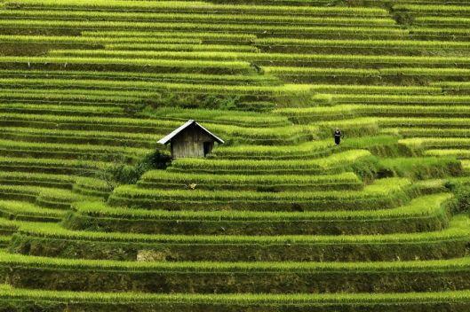 Les terrasses de Mù Cang Chải
