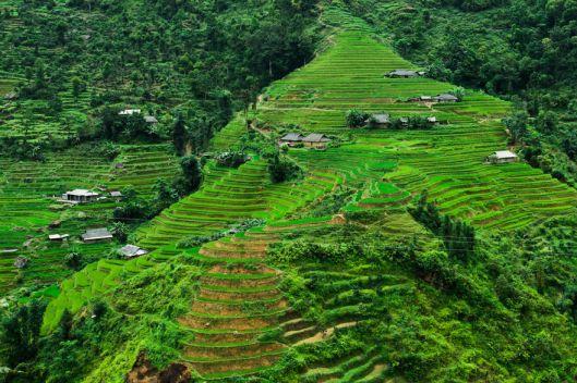Terrasses de Hoàng Su Phì