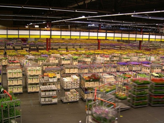 aalsmeer-flower-auction-1[2]
