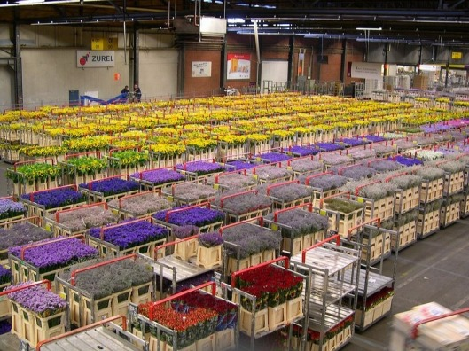 aalsmeer-flower-auction-2[2]