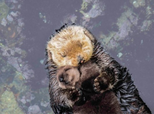 Mom-and-Baby