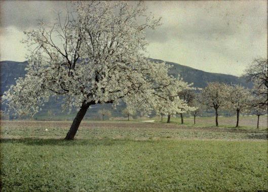 In Saconnex d'Arve, Geneve