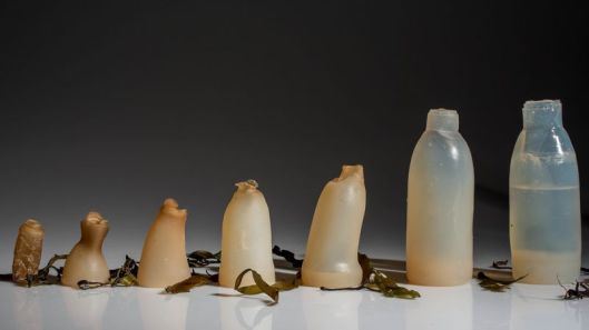 algae-water-bottle-by-ari-jonsson-designmarch_dezeen_ban.0
